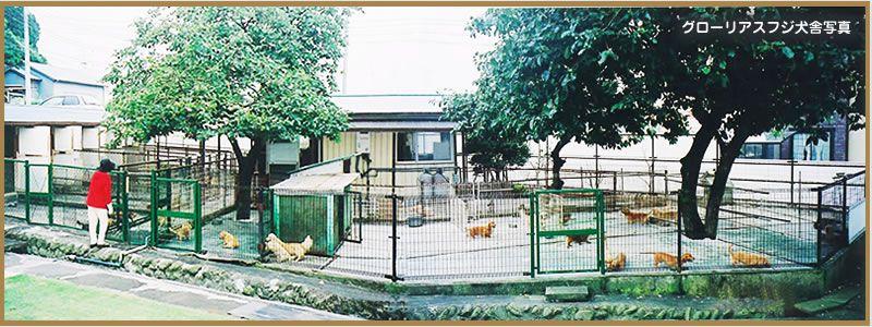 カニンヘンダックス ・ミニチュアダックスのブリーダー グローリアスフジ犬舎 広い繁殖場