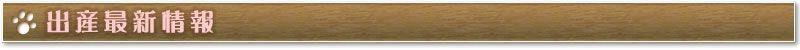 ミニチュアダックス、カニンヘンダックス(カニヘンダックス・カニーヘンダックス)チワワ プードル、豆柴の最新出産情報で